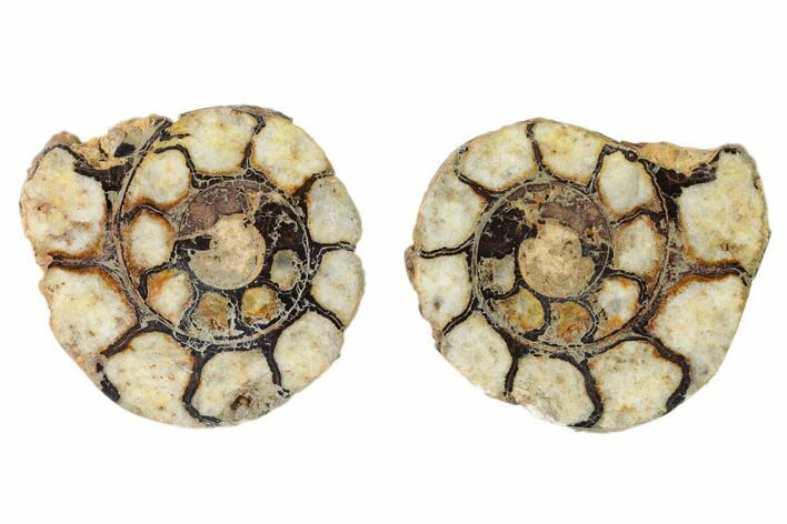 "1.9"" Iron Replaced Ammonite Fossil Pair - Morocco"