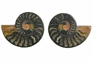 "4.62"" Cut/Polished Ammonite Fossil (Pair) - Unusual Black Color For Sale, #132620"