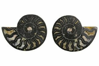 "Buy 4.31"" Cut/Polished Ammonite Fossil (Pair) - Unusual Black Color - #132628"