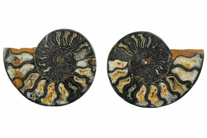 "4.28"" Cut/Polished Ammonite Fossil (Pair) - Unusual Black Color"