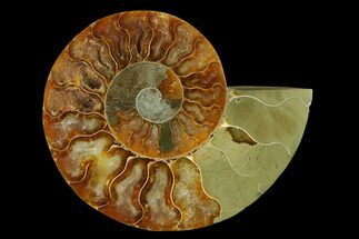 "Buy 4.3"" Agatized Ammonite Fossil (Half) - Madagascar - #139675"