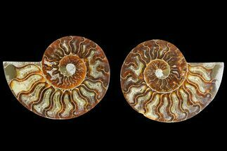 "Buy 4.65"" Agatized Ammonite Fossil (Pair) - Madagascar - #139729"