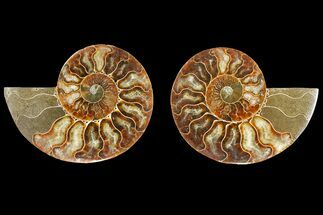 "4.35"" Agatized Ammonite Fossil (Pair) - Madagascar For Sale, #139733"