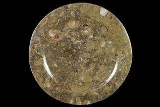 "Buy 11.4"" Fossil Orthoceras & Goniatite Round Plate - Stoneware - #140071"