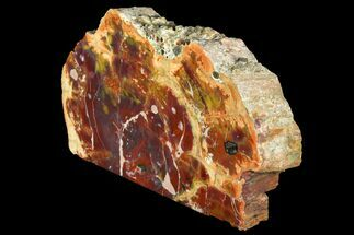 "Buy 12"" Colorful Petrified Wood (Araucarioxylon) Stand-up - Arizona - #141055"