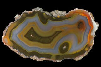Quartz var. Agate - Fossils For Sale - #141375