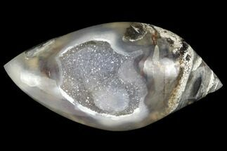 "1.95"" Chalcedony Replaced Gastropod With Druzy Quartz - India For Sale, #141344"