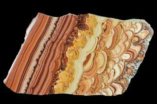 "7.3"" Polished Slab Of Rolling Hills Dolomite - Mexico For Sale, #142511"