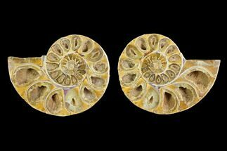 "3.7"" Cut & Polished Agatized Ammonite Fossil (Pair)- Jurassic For Sale, #131666"