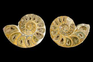 "Buy 3.1"" Cut & Polished Agatized Ammonite Fossil (Pair)- Jurassic - #131686"