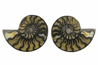 "Buy 4.75"" Cut/Polished Ammonite Fossil (Pair) - Unusual Black Color - #132706"