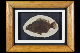 "3.9"" Framed Fossil Fish (Cockerellites) - Wyoming For Sale, #144122"