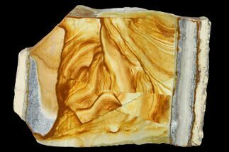 "3.5"" Polished Golden Picture Jasper Section - Nevada For Sale, #144965"