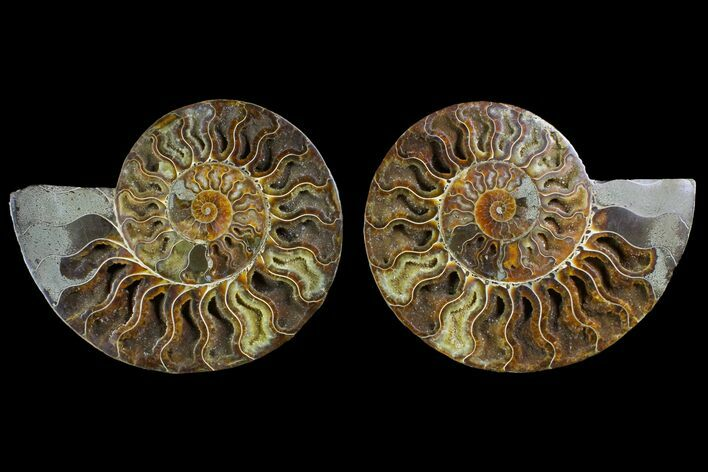 "7.05"" Agatized Ammonite Fossil (Pair) - Crystal Pockets"