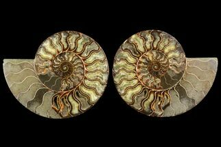 "8.75"" Agatized Ammonite Fossil (Pair) - Madagascar For Sale, #145220"