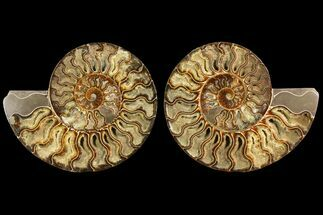 "Buy 8.1"" Agatized Ammonite Fossil (Pair) - Crystal Filled Chambers - #145222"