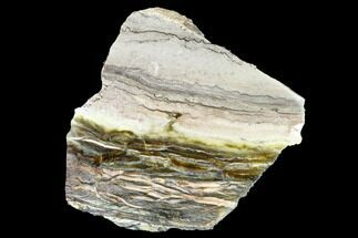 "Buy 4.9"" Chatoyant, Polished Pietersite Slab - Arizona - #146437"