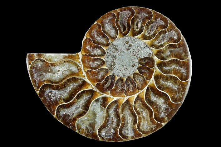 "3.45"" Cut & Polished Ammonite Fossil (Half) - Agate Replaced"