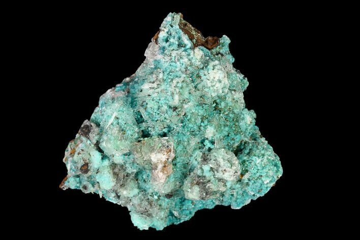 "1.3"" Aurichalcite, Rosasite and Calcite Association - Utah"