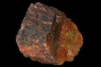 "Buy 3.6"" Polished Red/Yellow Petrified Wood (Araucarioxylon) - Arizona - #147886"
