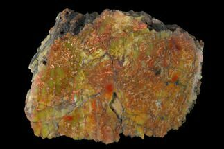"Buy 4.1"" Polished Red/Yellow Petrified Wood (Araucarioxylon) - Arizona - #147889"