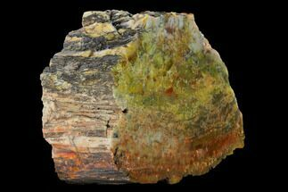 "Buy 6.6"" Colorful, Polished Petrified Wood (Araucarioxylon) - Arizona - #147904"