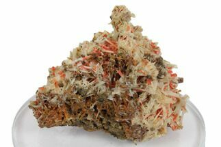"Buy 2.4"" Crocoite With Gibbsite - Adelaide Mine, Tasmania - #147973"