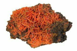 "2.5"" Crocoite Crystal Cluster - Adelaide Mine, Tasmania For Sale, #147974"