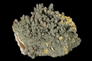 Barite & Pyrite - Fossils For Sale - #148320