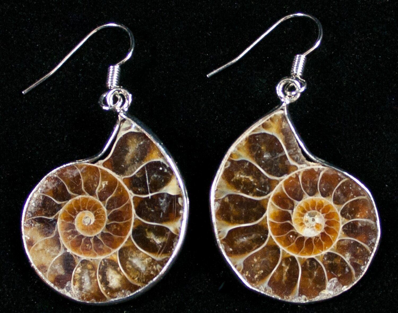 d31dd88a9 Stylish Ammonite Earrings For Sale (#10171) - FossilEra.com