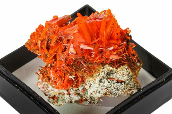 "1.4"" Bright Orange Crocoite Crystal Cluster - Tasmania"