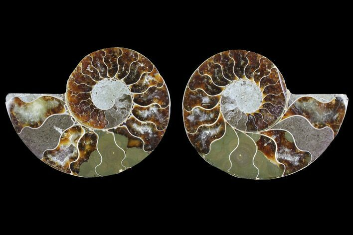 "Bargain, 3.35"" Agate Replaced Ammonite Fossil (Pair) - Madagascar"