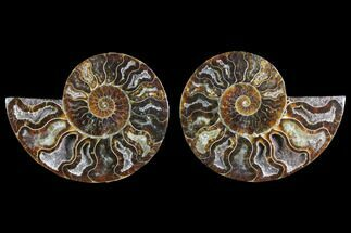 "3.2"" Agate Replaced Ammonite Fossil (Pair) - Madagascar For Sale, #145823"