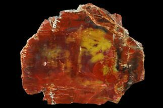 "5.6"" Rainbow Colored, Polished Petrified Wood Slab - Arizona For Sale, #150047"