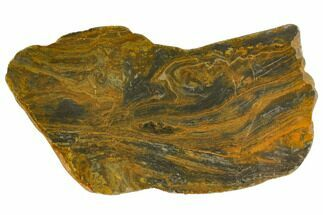 "8.7"" Polished, Mesoproterozoic Stromatolite (Conophyton) - Australia For Sale, #150368"