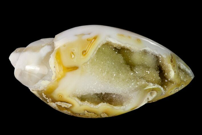 "1.64"" Chalcedony Replaced Gastropod With Druzy Quartz - India"