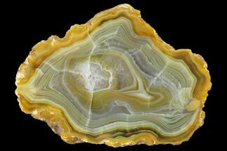 Chalcedony var. Agate - Fossils For Sale - #150537