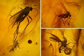 Three Fossil Flies (Diptera) In Baltic Amber For Sale, #150761