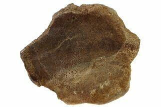 "Buy 4.5"" Polished Dinosaur Bone (Gembone) Slab - Utah - #151462"