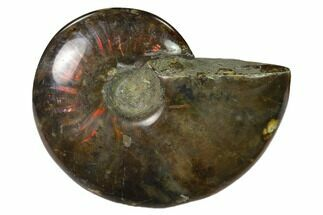 "Buy 2.7"" Red Flash Ammonite Fossil - Madagascar - #151729"