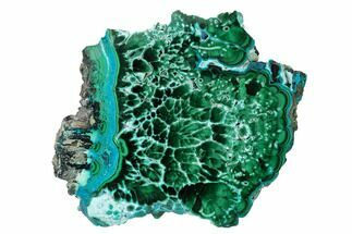 "Buy 5.8"" Polished Malachite & Chrysocolla Slab (Thick-Cut) - Congo - #152041"