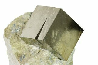 Pyrite - Fossils For Sale - #152289