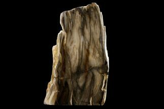 "Buy 8.2"" Polished, Petrified Dawn Redwood Stand Up - Oregon - #152422"