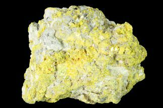 "Buy 1.48"" Yellow Orpiment - Crven Dol Mine, Macedonia - #153349"