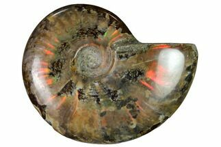 "2.85"" Red Flash Ammonite Fossil - Madagascar For Sale, #151739"