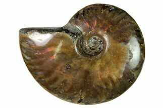 "Buy 2.2"" Red Flash Ammonite Fossil - Madagascar - #151705"