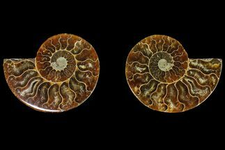 "2.9"" Agatized Ammonite Fossil (Pair) - Madagascar For Sale, #145982"