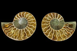 "3"" Agatized Ammonite Fossil (Pair) - Madagascar For Sale, #145985"