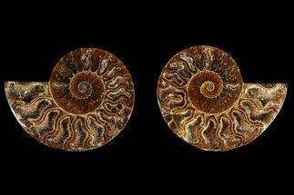 Cleoniceras - Fossils For Sale - #145932