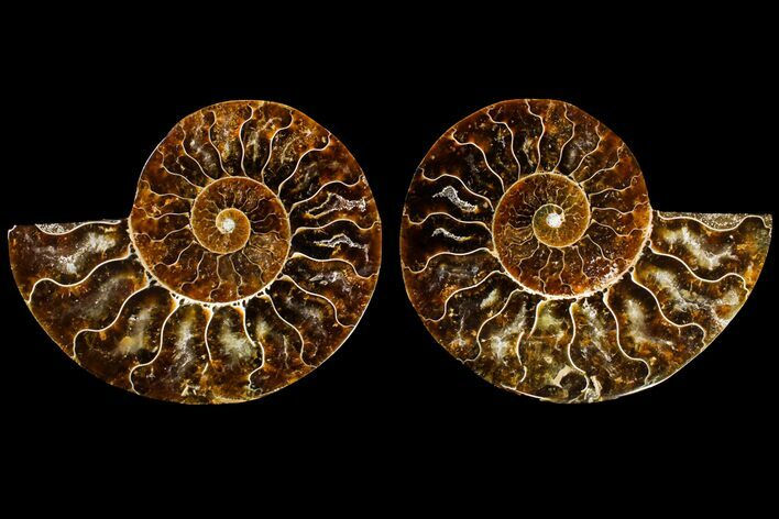 "3.1"" Agatized Ammonite Fossil (Pair) - Madagascar"